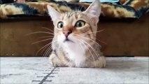 Ce chat effrayé devant un film d'horreur fait le buzz !