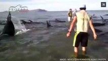 Vingt-quatre baleines s'échouent et meurent sur une plage méxicaine