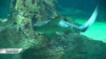 Découvertes Aquitaine - L'aquarium de Biarritz