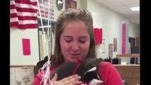 Des élèves offrent un chaton à leur prof qui vient de perdre le sien : réaction magique