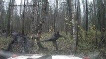Il abat un arbre à coups de pied et il lui tombe sur la tête !
