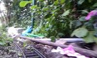 Rundfahrt auf meiner kleinen Gartenbahn 2012 (2/2)