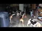Pack of Dogs Invade Garage in Cutest Take Over Ever