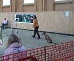 Laura-Maya kezdő agility, Tordas-Zoo Agility kupa,2010 szept.25(the best time:))