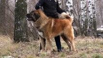 Sormovskaya Zarya Kremen 22 months For Sale!