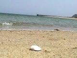 Seaside resort of early summer(岩国市由宇町の海辺)