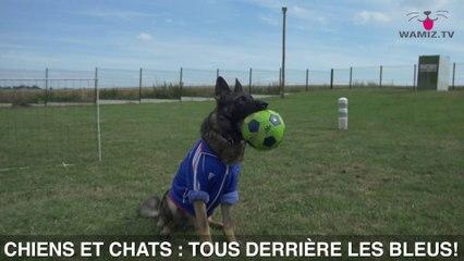EURO 2016, chiens et chats TOUS derrière les bleus!