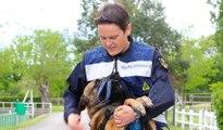 Euro 2016 : les chiens, alliés des gendarmes dans la lutte antiterroriste