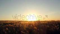 Fields Pack (Stock Footage)
