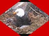 DECORAH EAGLES  4/8/2015   8:29 AM  CDT    WHO HAS THE POWER NOW