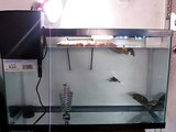 (New) 29 Gallon Update @Red Eared Sliders 3 Babys & 1 Big