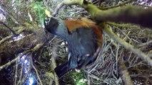 Il voulait filmer tranquillement la naissance d'oisillons, mais ce qui va se passer est affreux !