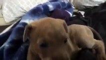Il Cucciolo Pensa Che Il Suo Amico Stia Piangendo E Reagisce In Modo Commovente