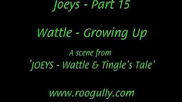 Kangaroo Joeys Part 15