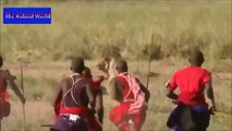 Biggest wild animal fights  CRAZIEST Animals Attack Caught  Crazy animal attack, funny animals    HD