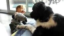 Ce bébé rigole sans s'arrêter en jouant avec un énorme chien