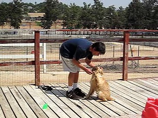 Jake lesson #2 5-17-07 Golden Retriever puppy training