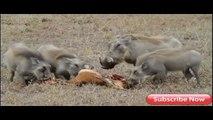 When Animal Prey Fights Back - Biggest wild animal fights,Lion,Buffalo,Giraffe,Bear,Giraffe – kent