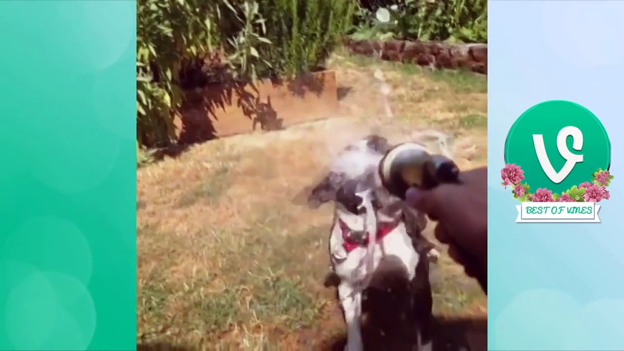 Best Funny Dog Vines 2015 PART 2 | funny pets | funny pets videos