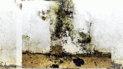 Mold Remediation NJ