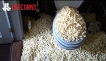 Defcorn 1 Popcorn Hardstyle Party