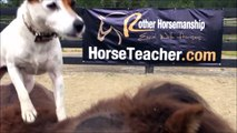 Quand les chiens se mettent à monter à cheval et font du saut d'obstacle
