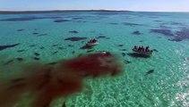 Un banc de 70 requins tigres attaquent sauvagement une baleine