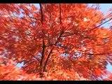 South Korea Everland Theme Park, Sky Way  28 October 2010