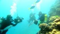 Explorez les océans avec Google Maps