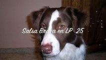 Salsa Brava en LP 25 - Baigelach - Juan Calle And His Latin Lantzmen