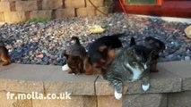 Une flopພ de chiots s en prennent à un pauvre chat qui ne bouge pas une oreille