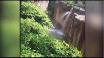 Gorilla grabs child who's fallen into habitat at Cincinnati Zoo Gorilla Grabs Child Whos Fallen int