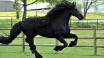Avec sa belle crinière, il est élu comme le plus beau cheval du monde