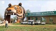 """Trasladados más de 100 tigres al """"Templo del Tigre"""" de Tailandia"""