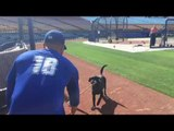 Professional Baseball Player Tries Hand at Dog Training