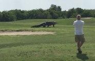 Un énorme alligator s'invite sur un golf de Floride