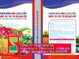 NPK 15-10-19-5CaO+TE