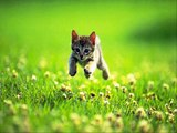 #Cute #Cats and #Kittens #funny #meowing #video #Compilation Cats Kitten doing #funny things 549
