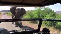 Terrifying moment Arnold Schwarzenegger charged by Elephant