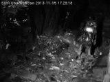 SWR Uhu Eifel 2013-11-15 17:25-17:35 Uhus rufen - Mann verjagt (andere) Frau