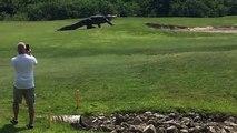 Un alligator géant sur un terrain de golf en Floride Vous devriez aimer