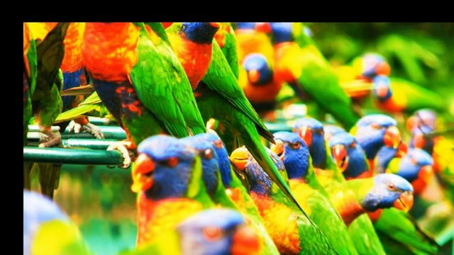 mother-nature-s-colors-avior45