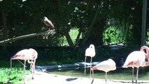 23 - CERZA - Parc Zoologique - Flamands roses