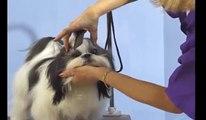 Shih Tzu Grooming | Shih Tzu Face Grooming - Top Knot