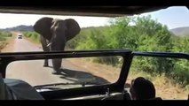 Angry Elephant is Chasing Hollywood Actor Arnold Schwarzenegger