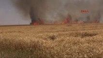 Ceylanpınar'da 90 Dönüm Arazi Yangında Kül Oldu
