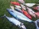 Mixed bag reef fish - Mission beach Qld 28/06/13