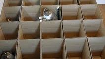 Les chats adorent les boites en carton…
