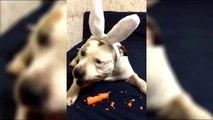 Tous les lapins aiment les carottes ...TOUS !