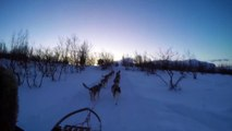 Dog Sledding in Abisko, Sweden